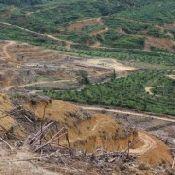 deforestationreport_2.normal