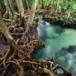 mangroves_3.normal