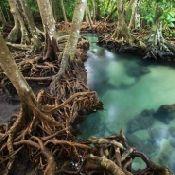 mangroves_3.normal