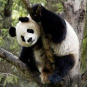 pandapicture_3.normal