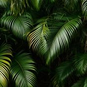 rainforest_leaves_3.1.normal