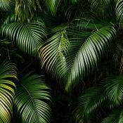 rainforest_leaves_3.1.normal