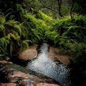 Nature Stream