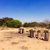 zambia_charcoal3