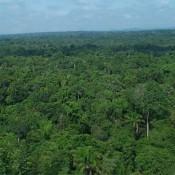 AmazonRainforest3