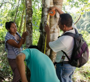 Sara Camacho (left) explains the importance of measuring trees at the right height. Photo credit: Carlos Herrera