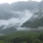Forest in New Zealand © Kelley Hamrick