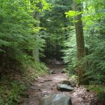 enchanted-forest-1530895
