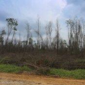 Forestland3