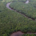 PeatForest