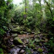 Madagascar Rainforest image 3