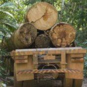 RainforestLogTruck3